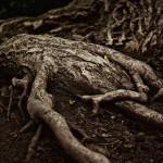 Botanischer Garten – Version 2