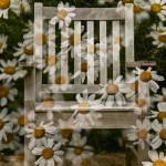 Botanischer Garten Doppelbelichtung – Version 2